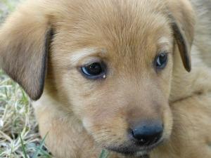 dog-64466_640