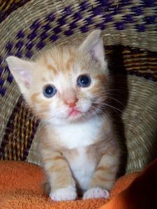kitten-329219_640